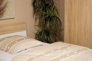plante dans une chambre d'hôtel